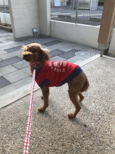 保護犬初めての散歩