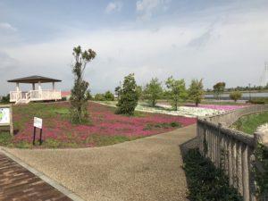 三ツ又池公園芝桜