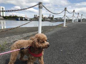 霞ヶ浦緑地公園犬散歩