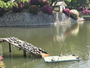 九華公園亀
