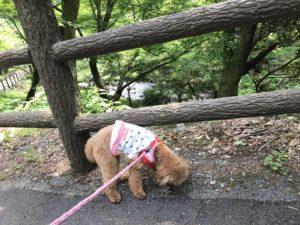 犬と養老公園
