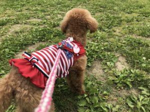 犬と木曽三川公園