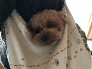 犬とスリングバッグ