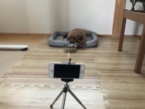 ペット監視
