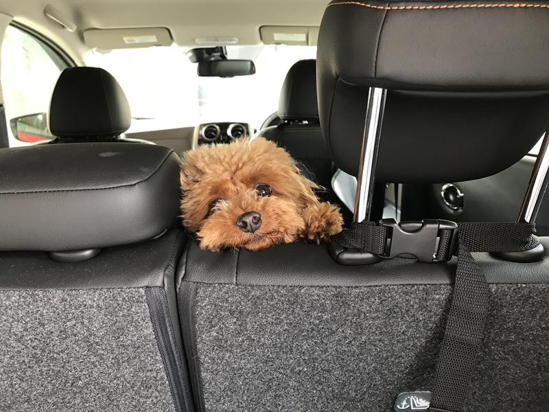 犬を車に乗せる