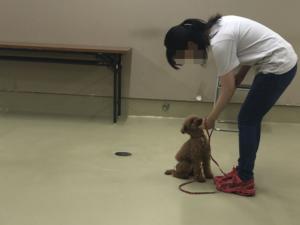 元保護犬練習中