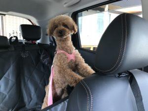 犬用シートベルト