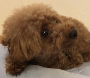台風に怯える犬