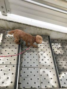 犬階段練習