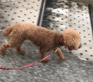 犬下り坂練習