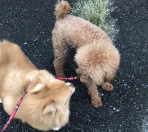 お友達と散歩