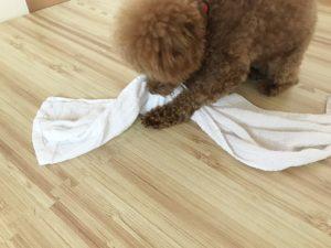 犬用手作りおもちゃ