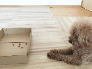 箱が怖い保護犬
