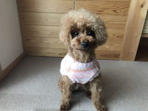 犬用セーター