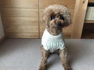 タートルネックのセーター