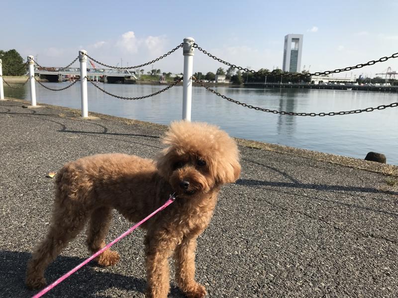 霞ヶ浦緑地公園