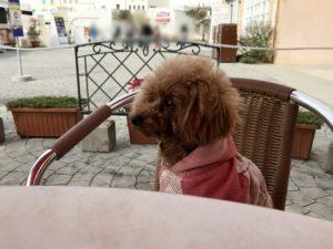 犬テラス席