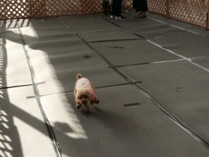 テンション高めの犬