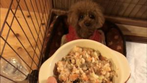犬の手作り食