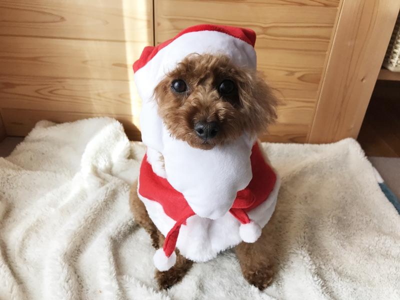 サンタクロース犬