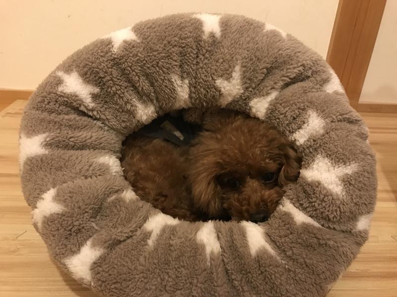 ロールクッション犬