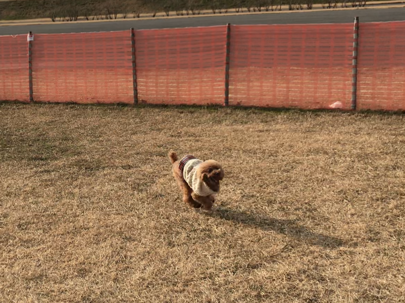 走る元保護犬