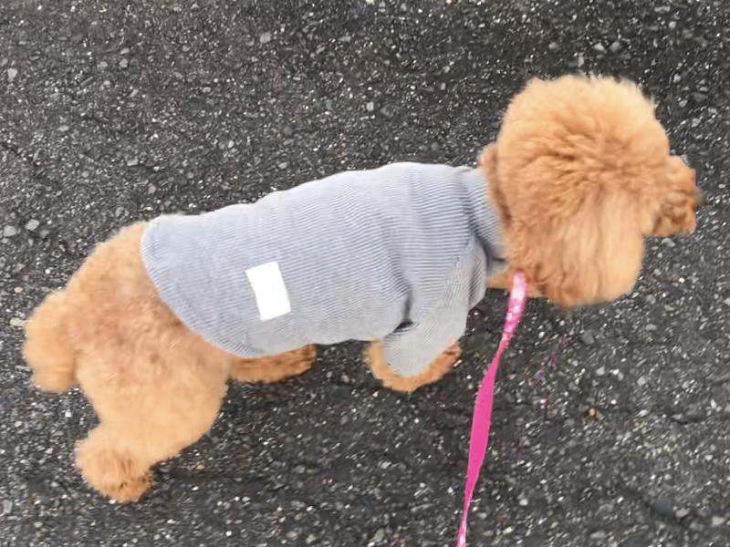 歩かない犬
