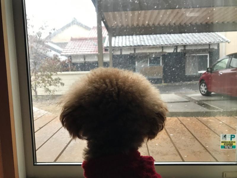 雪を眺める犬