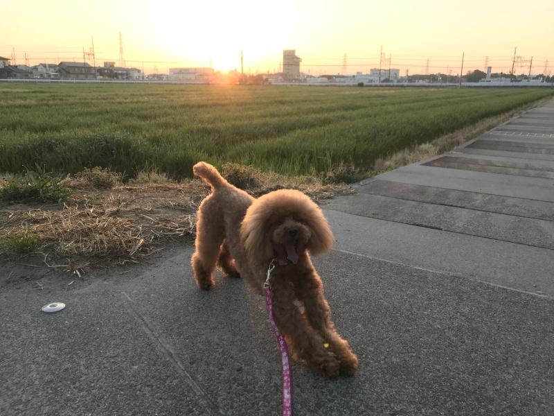 のんびり散歩