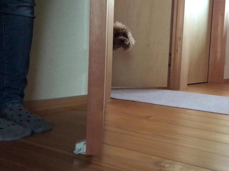 かくれんぼ犬