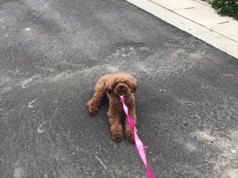 歩かない犬を動かす