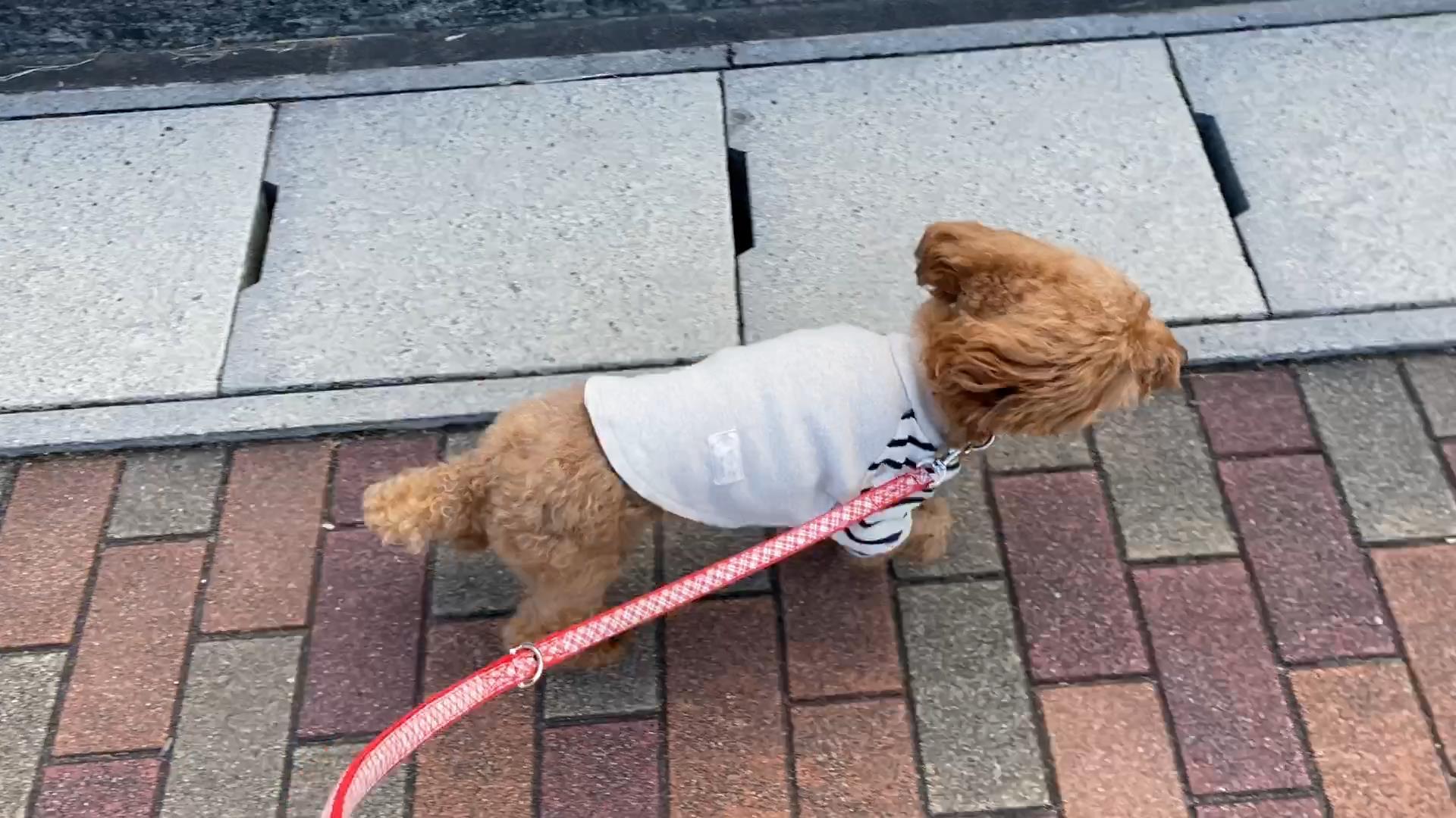 強風でも散歩
