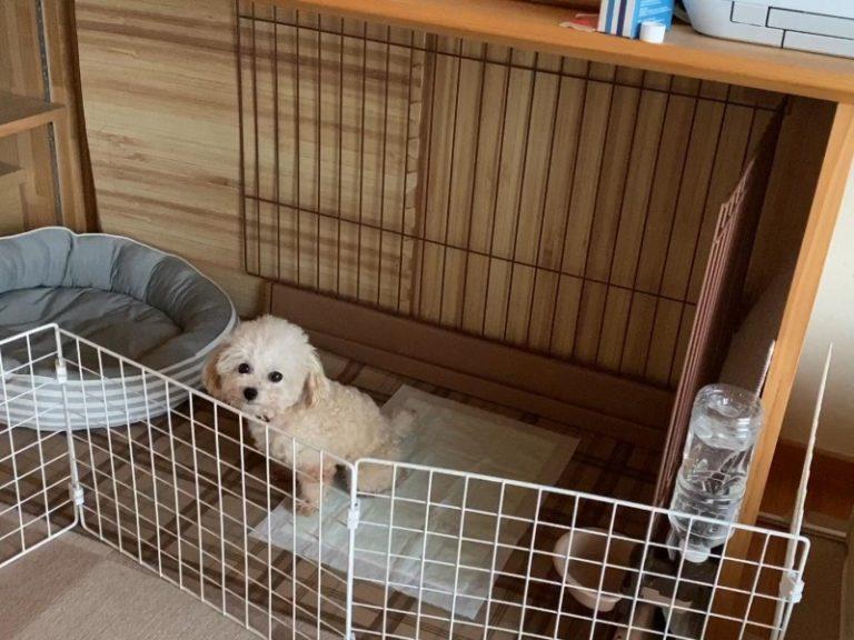 犬トイレトレーニング