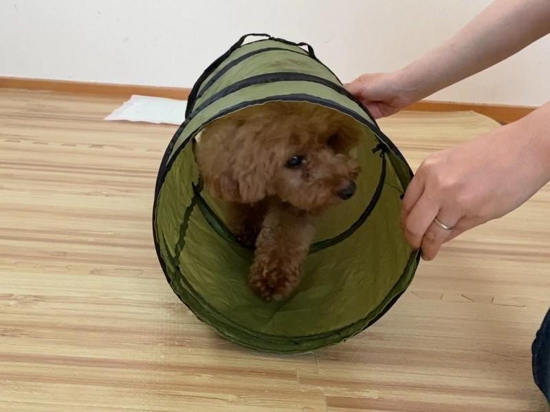 犬用トンネル