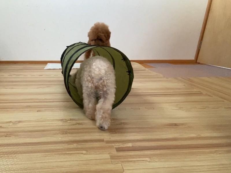 勇気を出した犬