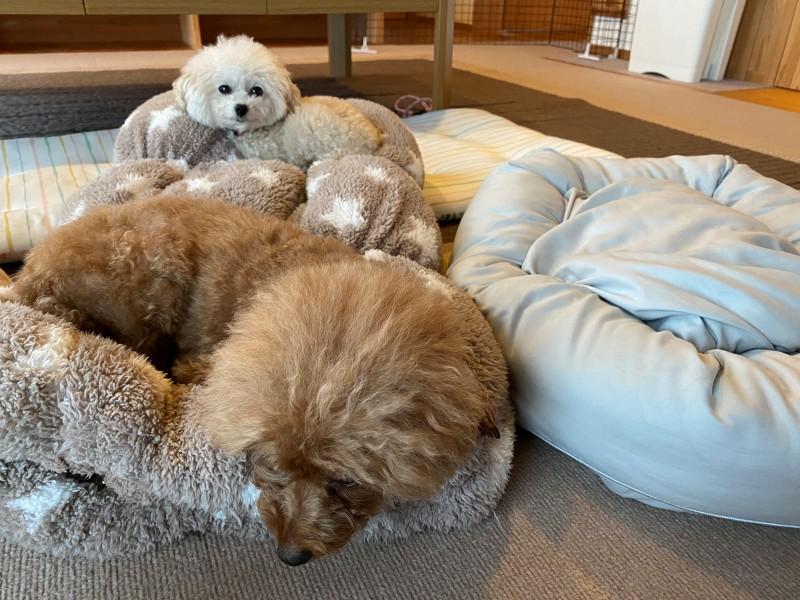 人気なベッド