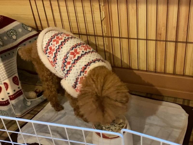 クリームシチューを食べる犬