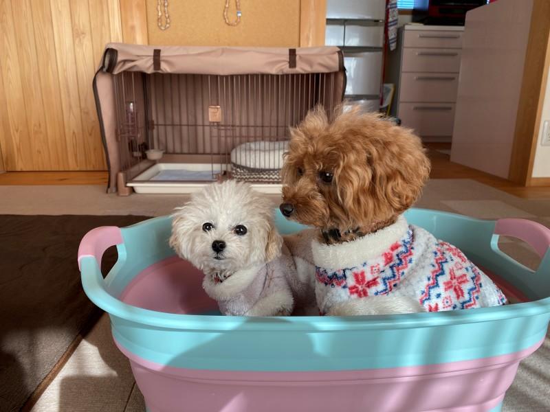 犬用バスタブ