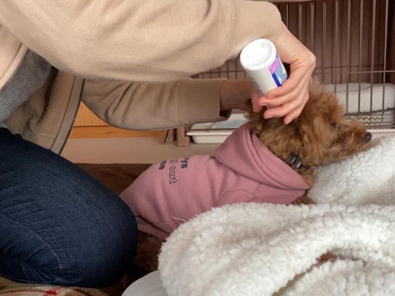 耳掃除平気な犬