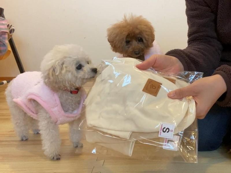 シンプルな犬服