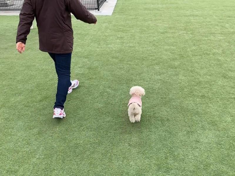 ドッグラン散歩