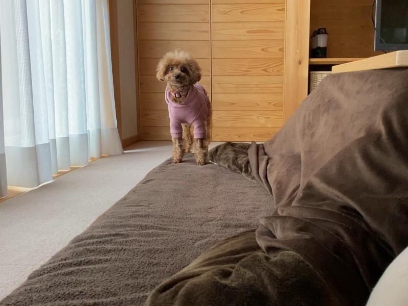 監視する犬