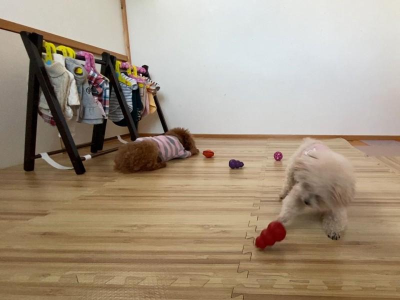 犬とおうち遊び