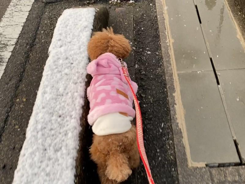 雪がちらつく散歩