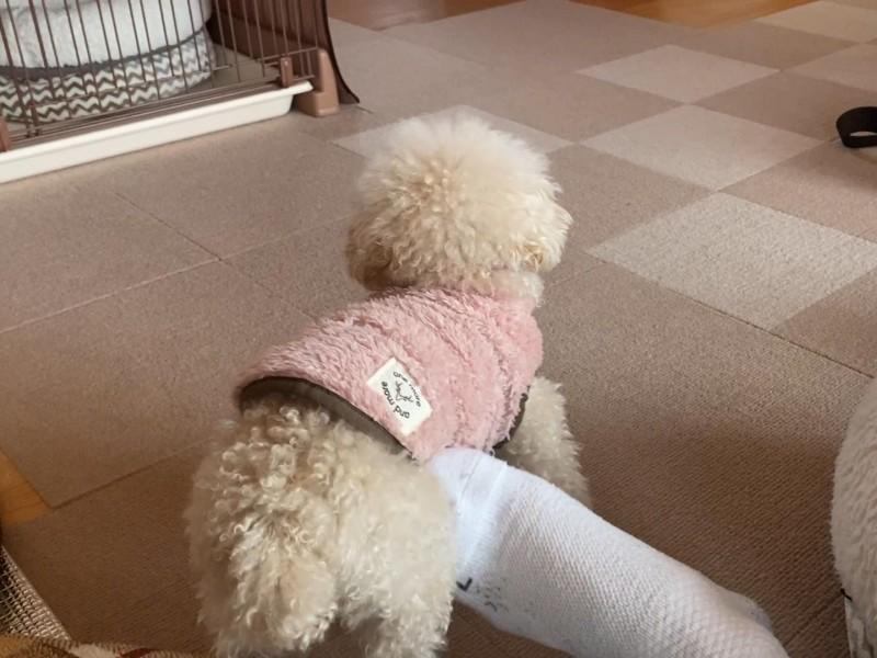 足にくっつく犬