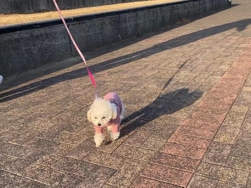 渋々歩く犬