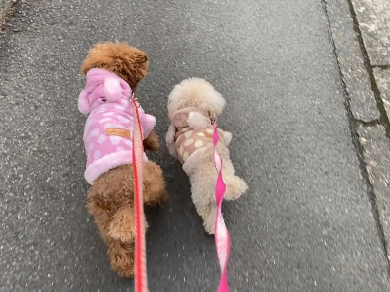 多頭飼い散歩