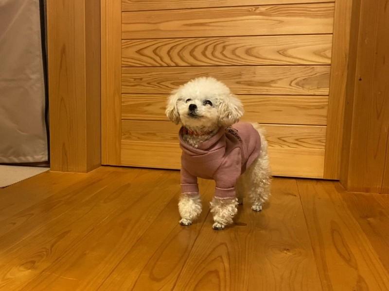 監視中の犬