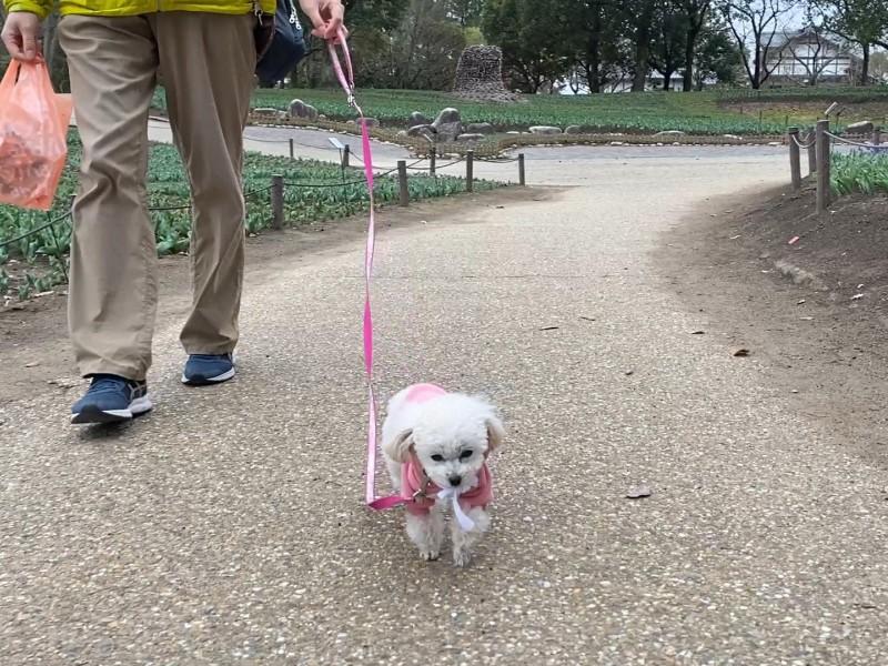 歩くの大好き