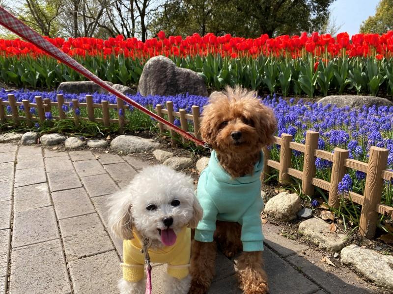 花と元保護犬